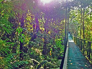 Costa Rica sky bridge