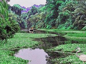 Costa-Rica-Tortuguero-National-Park