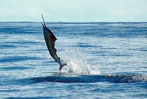 catching fish in samara costa rica